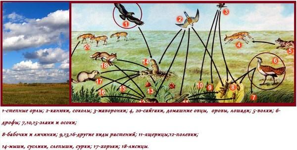 Цепь питания в степной зоне В природе все взаимосвязано друг с другом.  Животные и растения, обитающие в одной...